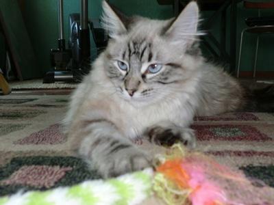 Lost Pets Success Stories Davis Localwiki