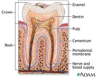 Dental Questions - Davis - LocalWiki