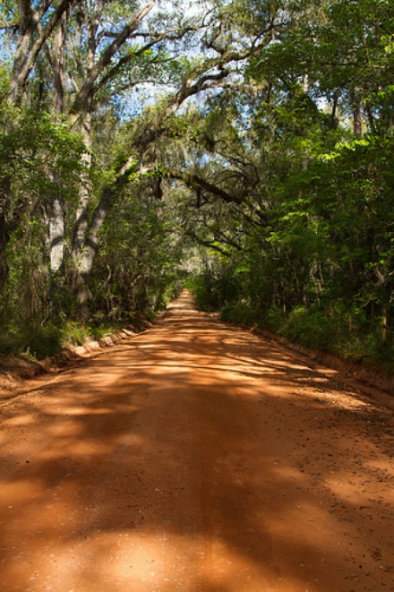 Sunny Hill RoadWhat ... & Canopy Roads - Tallahassee - LocalWiki