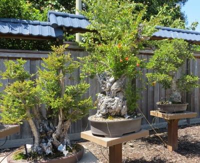 Bonsai Garden At Lake Merritt Oakland Localwiki