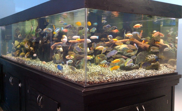 The 600 Gallon Tank At Rivers To Reef As Of July 2013