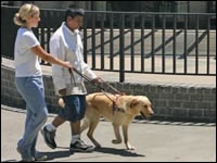 Image Result For Dog Trainings